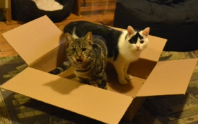 Jasper and Una in a Box